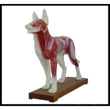 Akupunktur Tiermodell (M - 6-D Hund Modell)