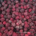 Zl-1046 Anic Blackberry Zl-1046 15