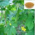 Bitter Melon Extract of Best Quality/Bitter Melon P. E/Bitter Melon Powder