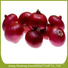 Cebola vermelha fresca de alta qualidade