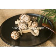 Produtor secado vegetal nutritivo do cogumelo da flor do chá