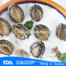 Fresh abalone frozen on sale with ISO Certification