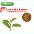 Natural Green Tea Txtract Powder