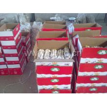Китайский белый чеснок в коробке (4.5cm, 5.0cm, 5.5cm, 6.0cm)