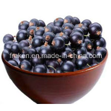 Extrait de haute qualité 5: 1 10: 1 20: 1 Acai Berry