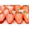 IQF congelant la fraise organique HS-16090911