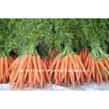 высокое качество и низкая цена морковь