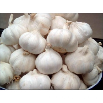 4 ~ 5cm Fresh And Plump White Garlic