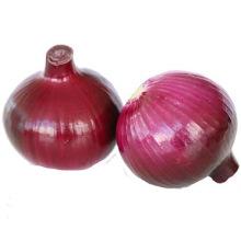 Hohe Qualität frischer roter Markt Zwiebel zum Verkaufspreis von der chinesischen Fabrik