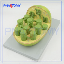 A escola PNT-0837 usou o modelo biológico do autoplast