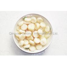 Chestnut chino conservado de fresco
