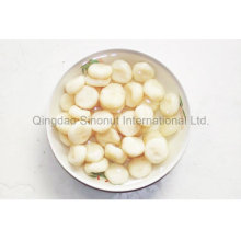 Canned Chinese Chestnut of Fresh