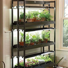 Indoor MicroGreen wachsende Hydroponic System
