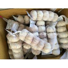Новый урожай Нормальный белый чеснок 5p / 200g