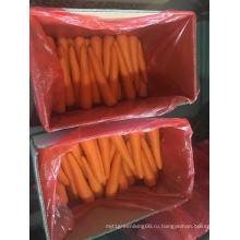Шаньдун свежий сорт моркови на продажу
