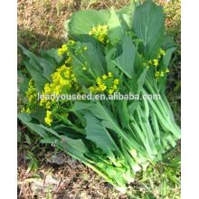 MPK23 Сичан ранней зрелости шум капуста китайская семена гибридные семена капуста китайская