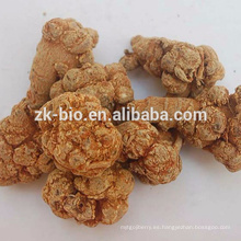 Best seller 100% natural Radix Notoginseng extracto