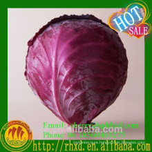 Popular Wholesale Fresh Red Cabbage Ready for sale
