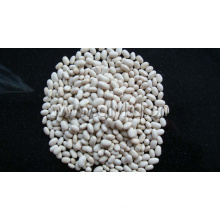 Haricot blanc de Chine Origine