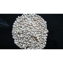 Origem de feijão branco rim China