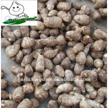 New Fresh Taro 50g and up