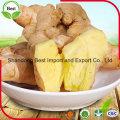 Precios frescos de mercado picante para Ginger Supply Ginger