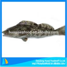 Frisch gefrorene ganze runde Fett Greenling Fisch mit günstigen Preis
