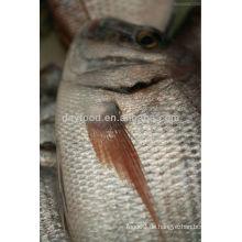 Seabream Fisch