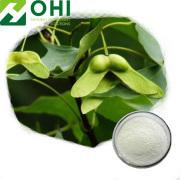 Acer Truncatum Seed Extract Nervonsyrapulver