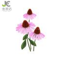 echinacea angustifolia extract 2% 4% chichoric powder