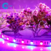 SMD 3528 LED PLant Grow Light full Spectrum