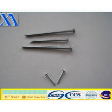 Best Quality Wire Nail Selling!