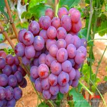 оптовая раздал органического винограда из Китая