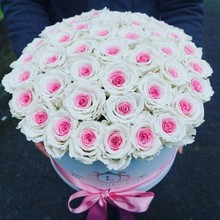 White cylinder rose flower box
