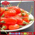 Gojiberry de frutas super com baixo preço