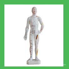 11 «Модель тела человека в области акупунктуры», китайская модель акупунктуры человека