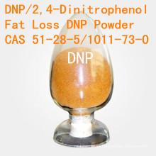 DNP para la pérdida gorda 2, 4-Dinitrophenol CAS 51-28-5 Polvo esteroide de la pérdida de peso de la alta pureza DNP DNP