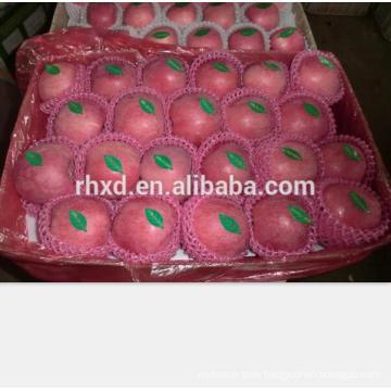 New crop Shandong Yantai origin fuji apple