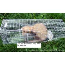 Live Capture Human Cage Trap for Weasels