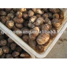 top chinese fresh big taro root 80g