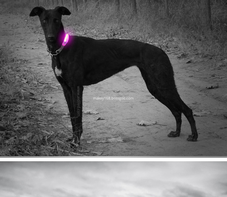 Pet Collar Led Lights