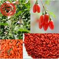 Traditional Superfood Ningxia Red Goji Berries