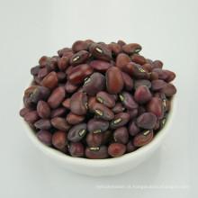 Feijão-vermelho chinês para o preço agradável venda quente feijão-frade vermelho