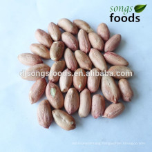 Chinese long type raw peanuts kernels