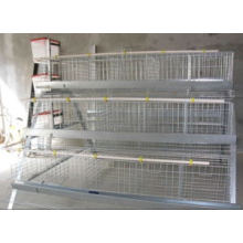 Professional Galvanized Chinese Bird Cage for Poultry Farm