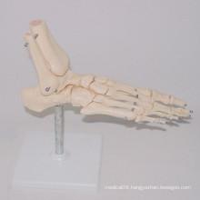 Medical Teaching Human Foot Skeleton Types Model (R020920)