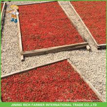 Getrocknete Goji Berry Exporteur in China Goji Berry 380g Körner / 50g Nach Brasilien