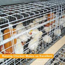 Cages automatiques de batterie de poulailler galvanisé par agriculture à vendre
