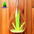 teardrop shaped glass terrarium for air plants