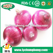 [HOT] 2015 onion/2015 new crop onion